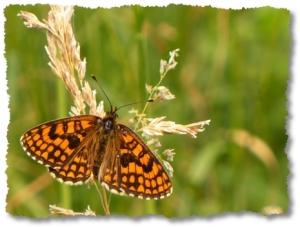 una farfalla a Venezia