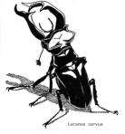 logo Associazione Naturalistica Sandonatese