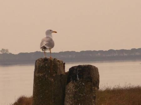 Birdwatching a Venezia