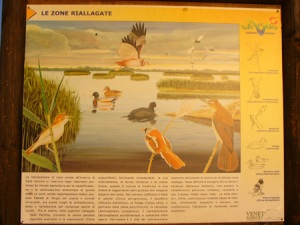 Brussa e/o Vallevecchia: birdwatching